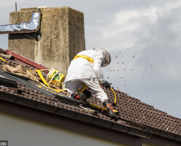 Let Us Help You With Bee Removal From Roof